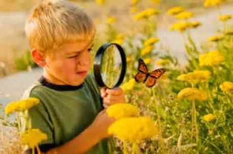 inquiry boy butterfly